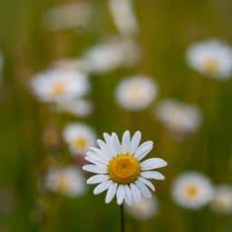 A white flower outside.